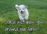 Stella will show you around the farm...
